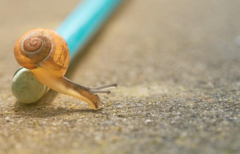 ゆっくり動くカタツムリの画像